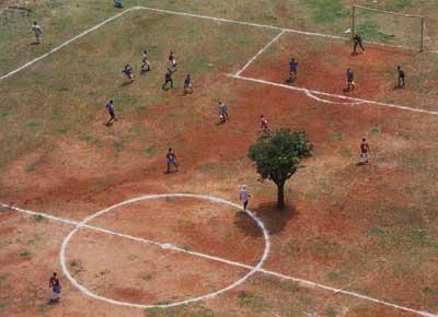 Baum auf dem Fussballplatz